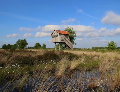 Exkursion in das Naturschutzgebiet Recker Moor